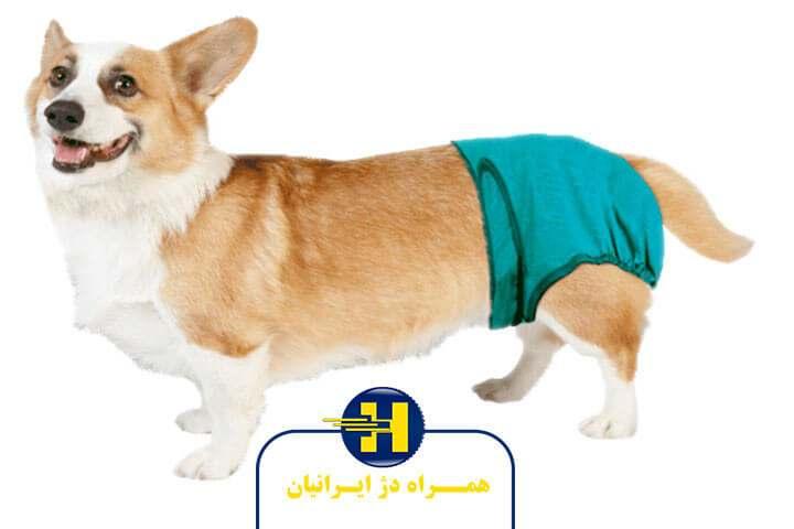 پوشک سگ